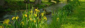 SPRING ON MINGES BROOK by Linda Gillespie